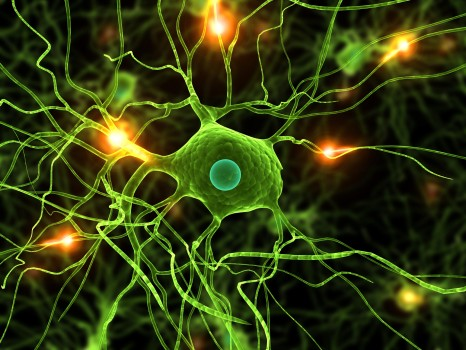 ACTIVE NERVE CELLS